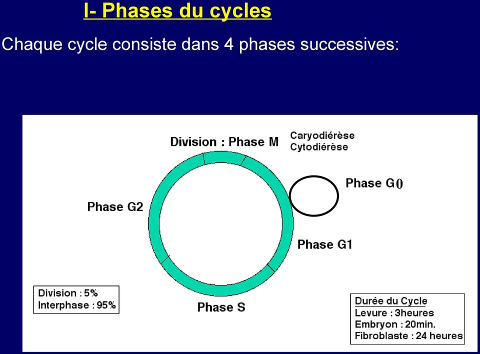 cycle consiste