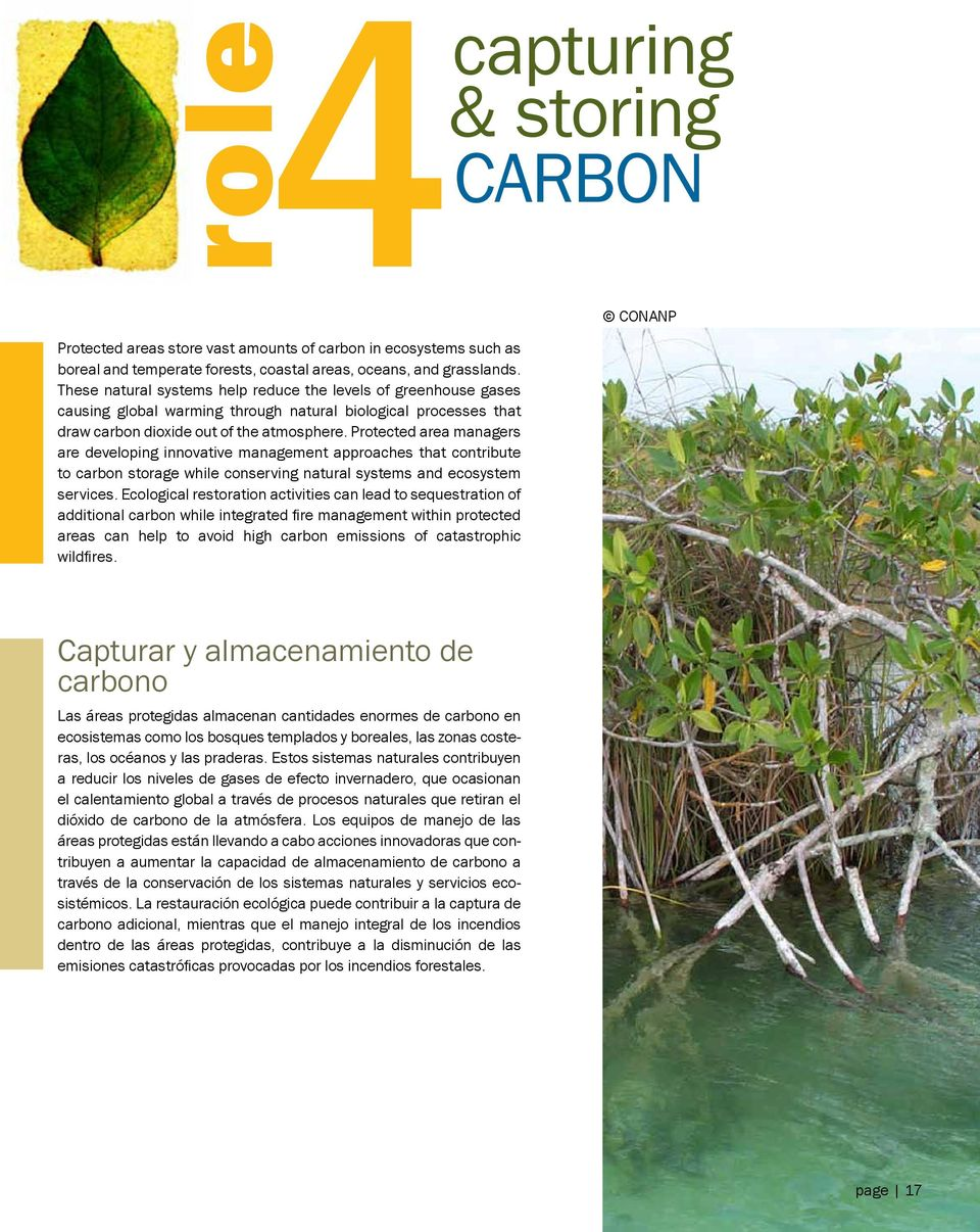 Protected area managers are developing innovative management approaches that contribute to carbon storage while conserving natural systems and ecosystem services.