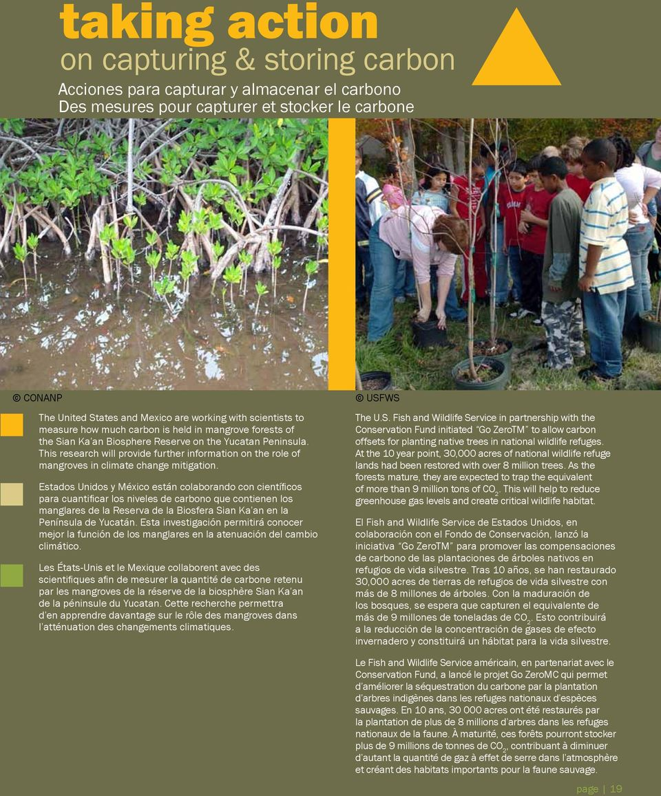 This research will provide further information on the role of mangroves in climate change mitigation.