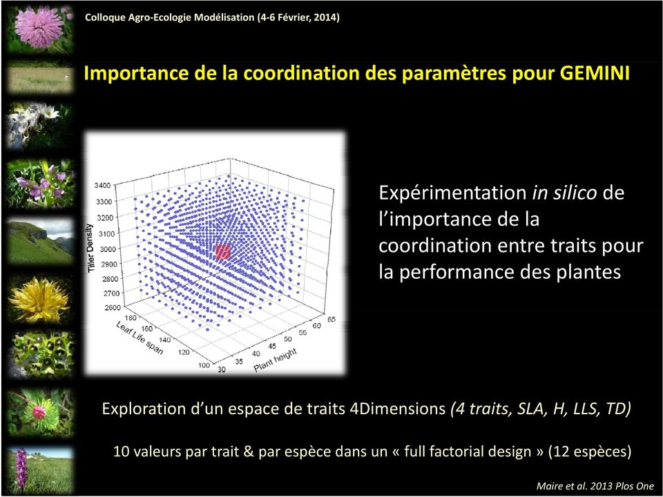 coordination entre traits pour la performance des plantes Exploration d un espace de traits 4Dimensions (4