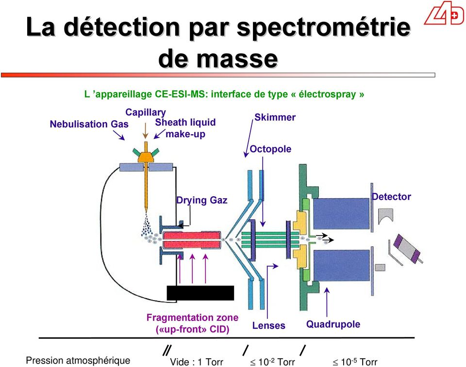 Octopole Drying Gaz Detector Capillaire MS Fragmentation zone («upfront»