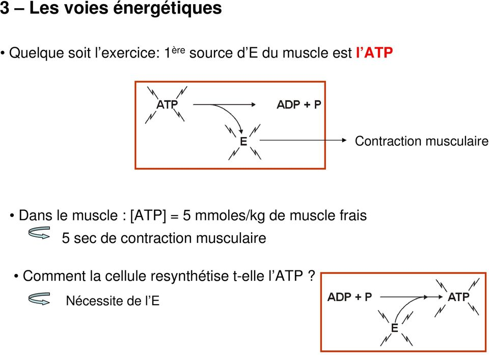 [ATP] = 5 mmoles/kg de muscle frais 5 sec de contraction