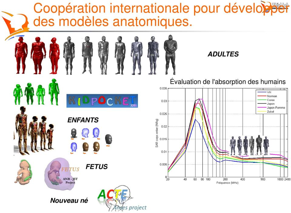 ADULTES Évaluation de l'absorption