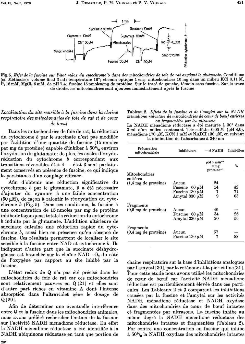 Methodes): volume final 3 ml; temperature 16 ; chemin optique 1 cm; mitochondries 10 rng dans un milieu KCl 0,11 M, Pi 16 mm, MgCl, 6 mm, de ph 7,4; fuscine 15 nmoles/mg de proteine.