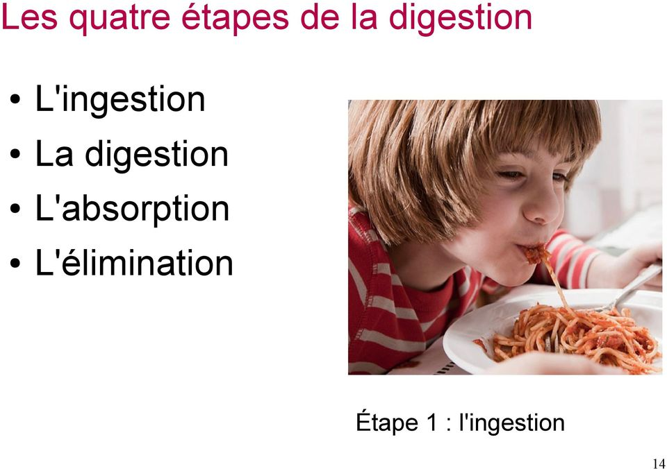 digestion L'absorption