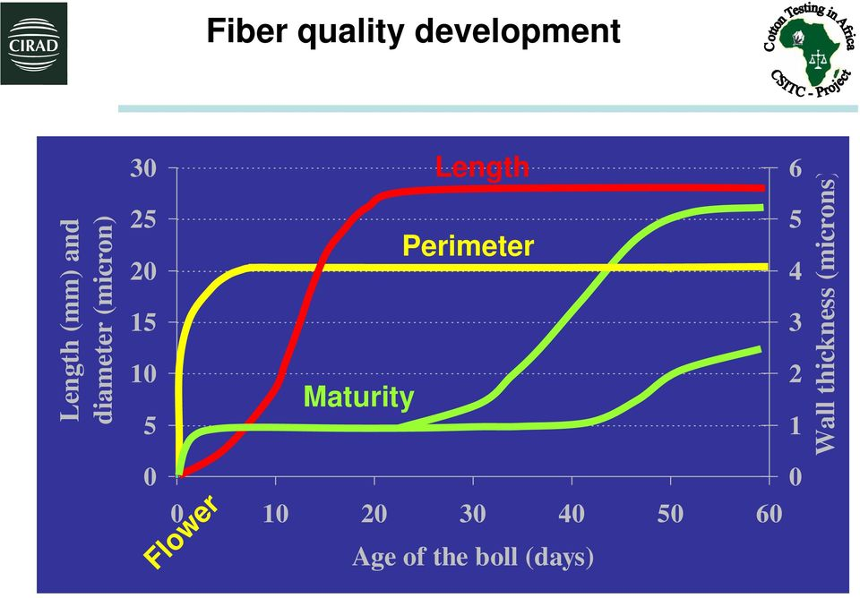 diameter (micron) Wall thickness (microns) Fiber