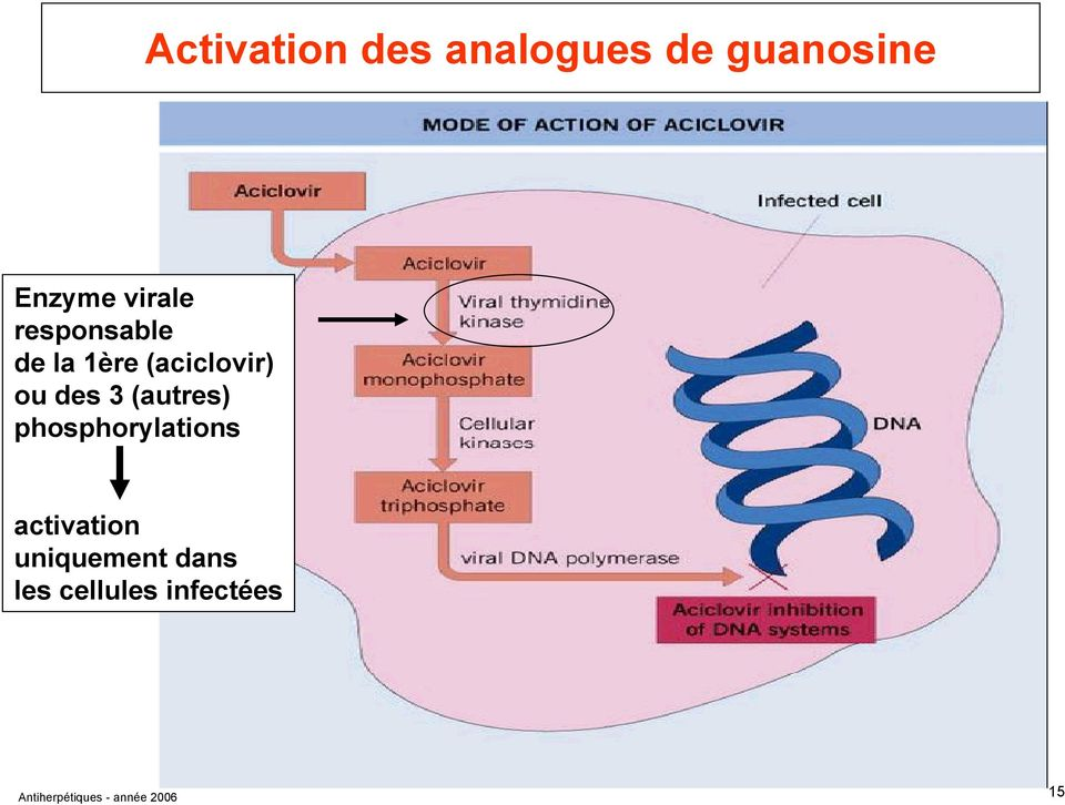 (autres) phosphorylations activation uniquement