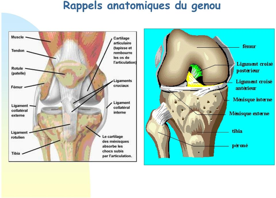 douleur ligament collateral