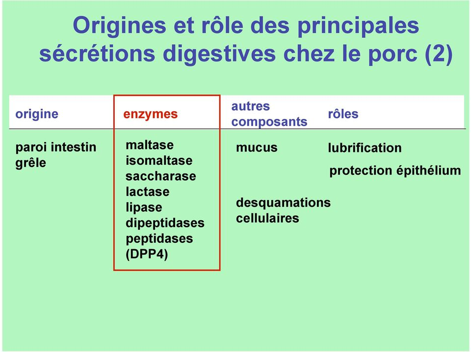 saccharase lactase lipase dipeptidases peptidases (DPP4) autres