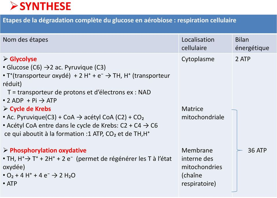 Pyruvique(C3) + CoA acétyl CoA (C2) + CO₂ Acétyl CoA entre dans le cycle de Krebs: C2 + C4 C6 ce qui aboutit à la formation :1 ATP, CO₂ et de TH,H+ Phosphorylation oxydative TH,