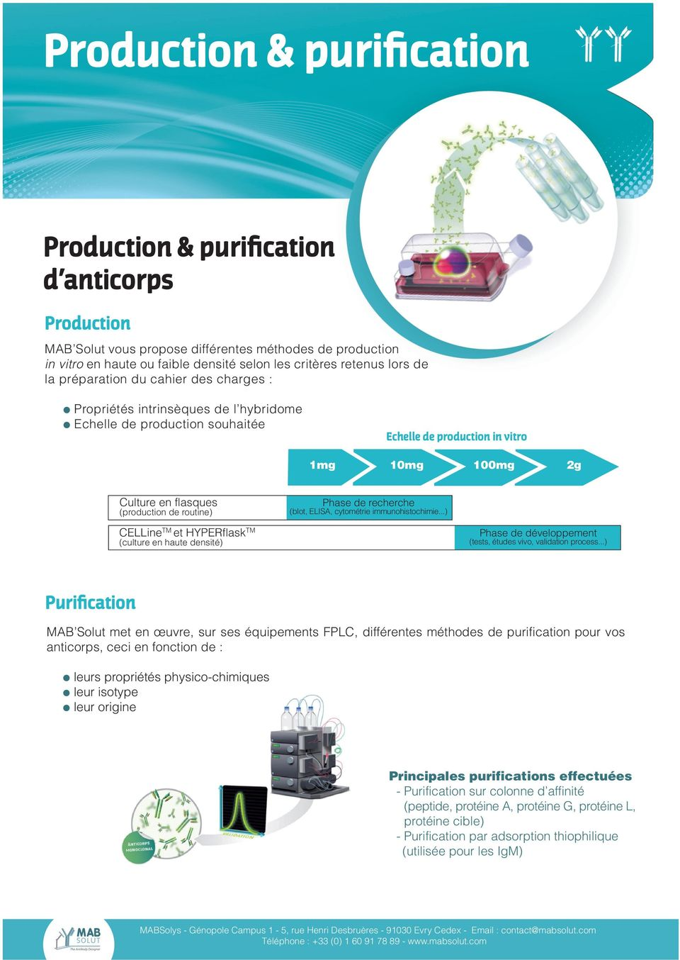 CELLineTM et HYPERflaskTM (culture en haute densité) 10mg 100mg 2g Phase de recherche (blot, ELISA, cytométrie immunohistochimie...) Phase de développement (tests, études vivo, validation process.