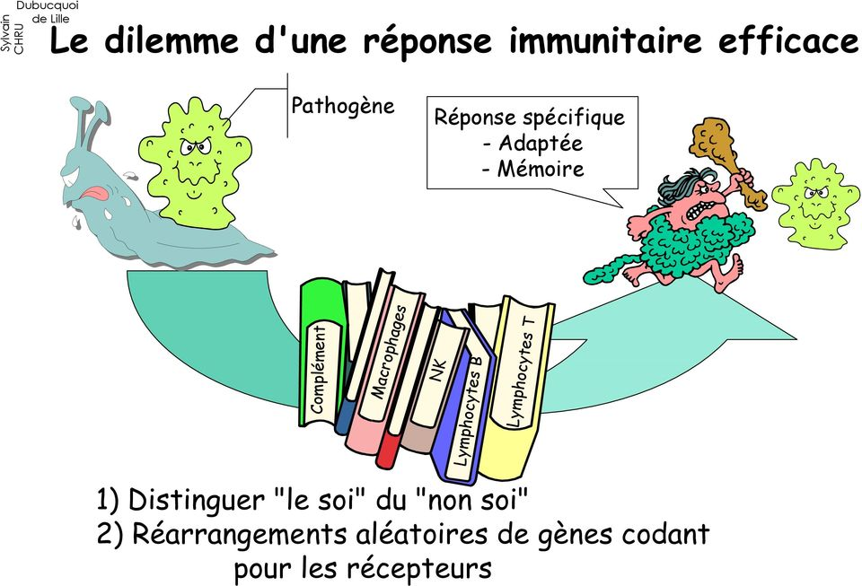 "NK Lymphocytes B Lymphocytes T 1) Distinguer ""le soi"" du ""non"