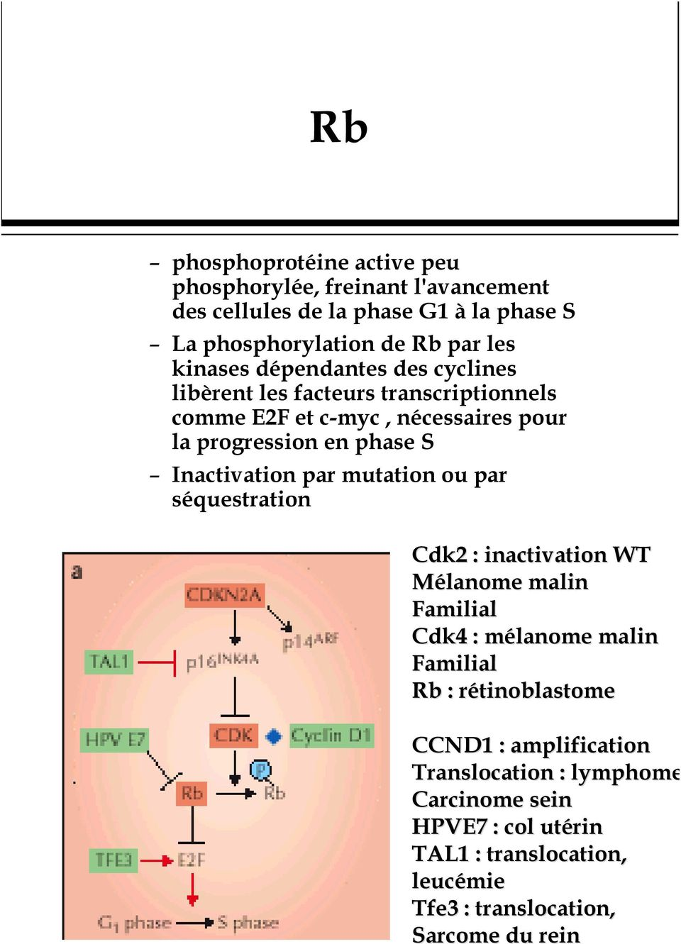 Inactivation par mutation ou par séquestration Cdk2 : inactivation WT Mélanome malin Familial Cdk4 : mélanome m malin Familial Rb :
