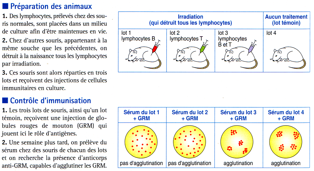 LES LYMPHOCYTES T CD4 PIVOTS DE LA REACTION IMMUNITAIRE ADAPTATIVE(1) Les LTCD4 activés se transforment en cellules effectrices les LT auxiliaires Comment les LTCD4 jouent-ils un rôle fondamental