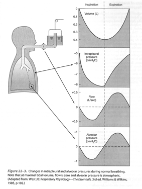 Ventilation spontanée Ventilation spontanée Morgan GE, Clinical Anaesthesiology, 2002