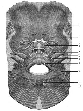 ANATOMIE MUSCULAIRE DU SOURIRE 117 fig.