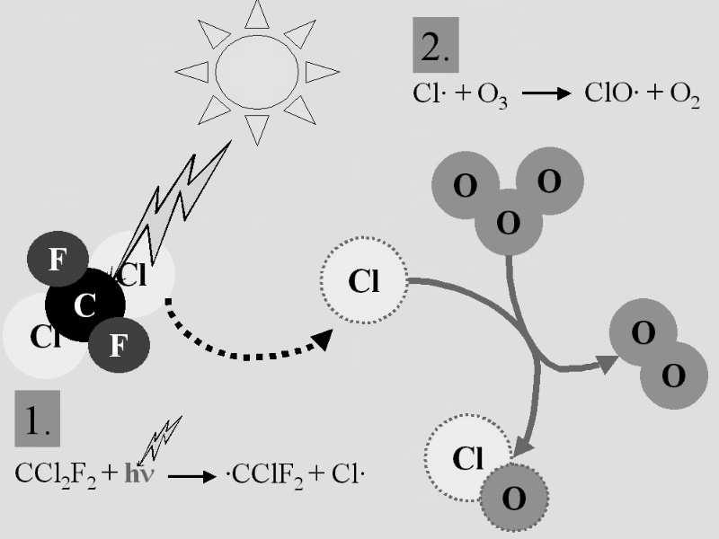 Cycle catalytique du Chlore Cl. + O 3 -> ClO.