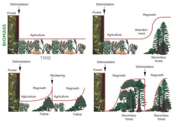 However, Amazonian landscapes are actually much more dynamic and complex: they experience cycles of clearing, cultivation, grazing, and secondary forest