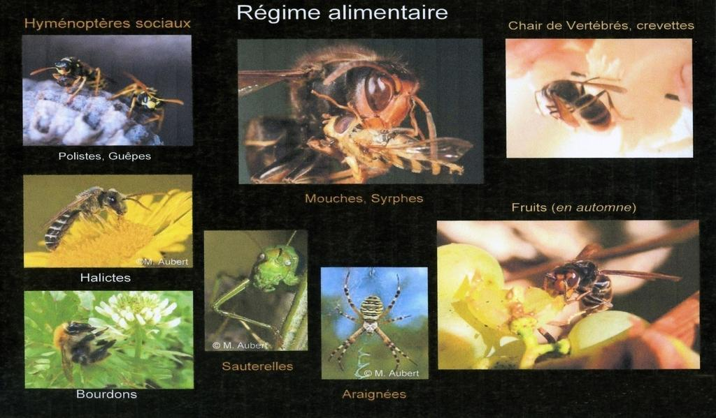 SON ALIMENTATION