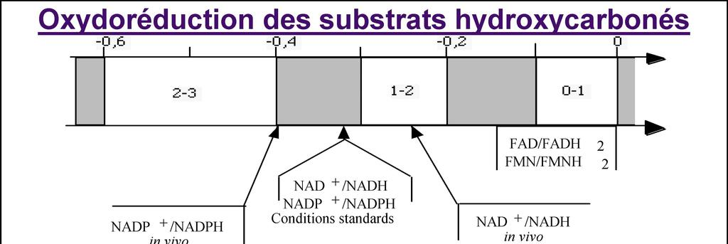 Oxydoréduction des substrats hydroxycarbonés NADP + /NADPH in vivo NAD + /NADH