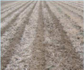 Implantation du maïs au strip till Le Strip Till : c est quoi?