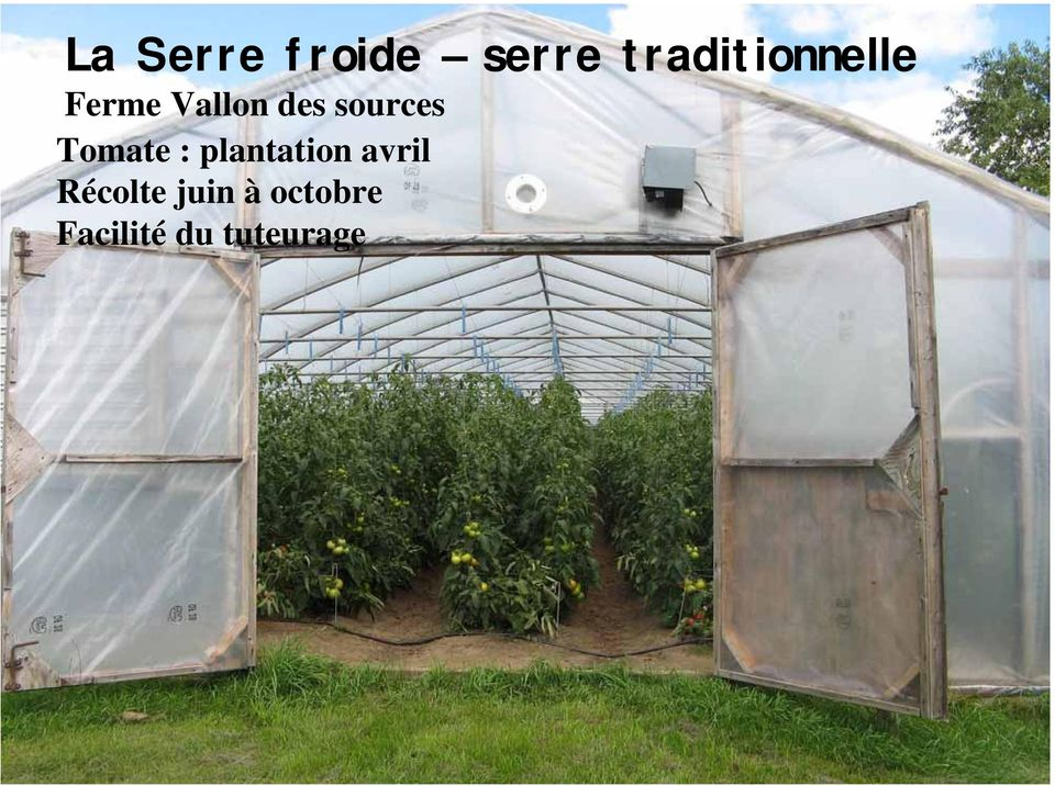 sources Tomate : plantation