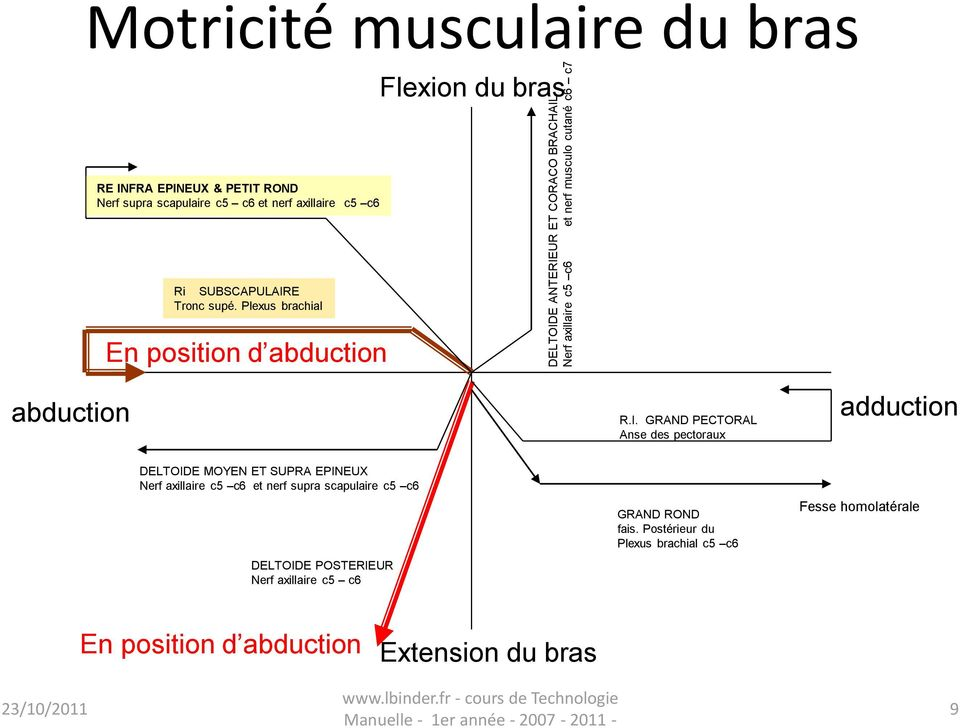 Plexus brachial En position d abduction abduction R.I.