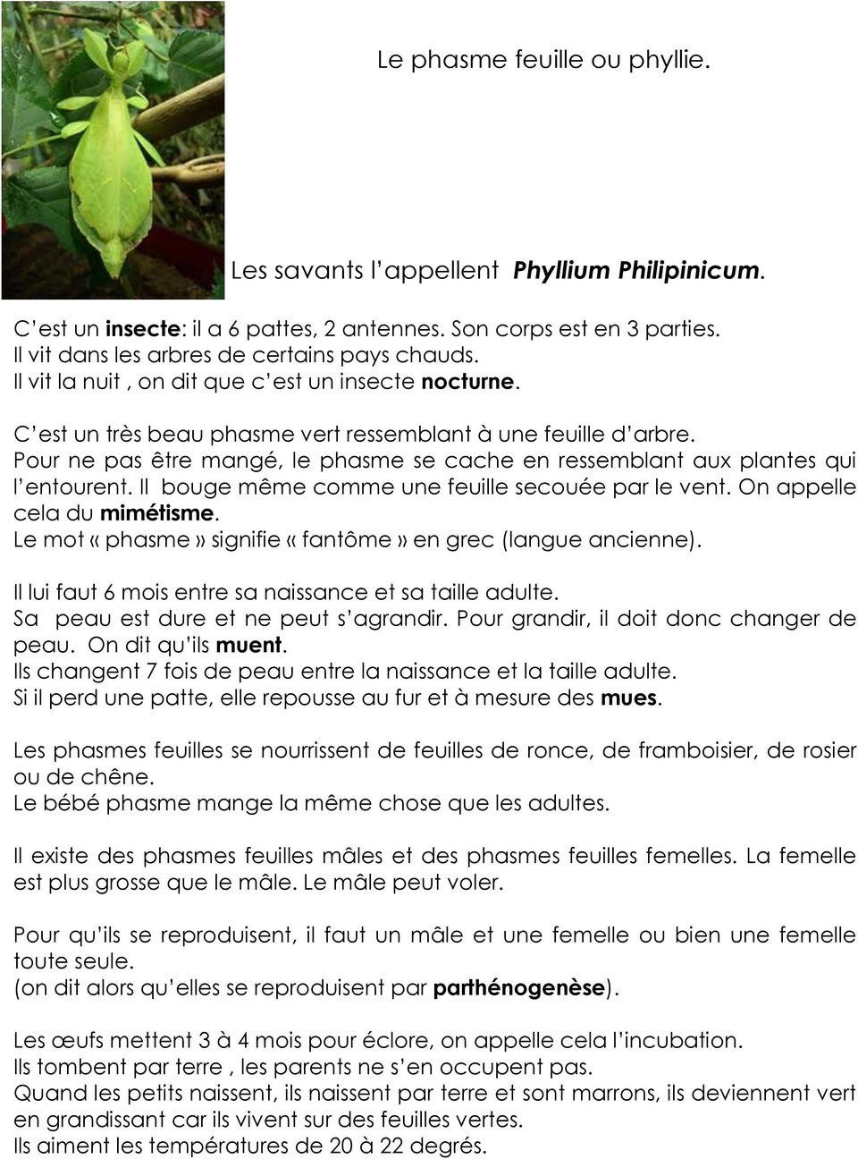 11b33616b9a Séquence phyllies (phasmes feuilles) - PDF